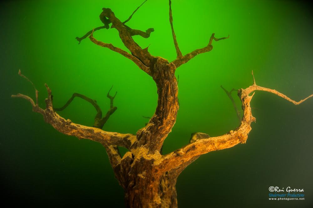 tree-standing-village-underwater-dam.jpg